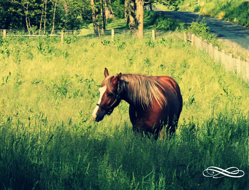 I love horses :)