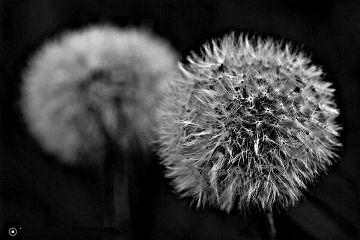 photography macro black & white nature
