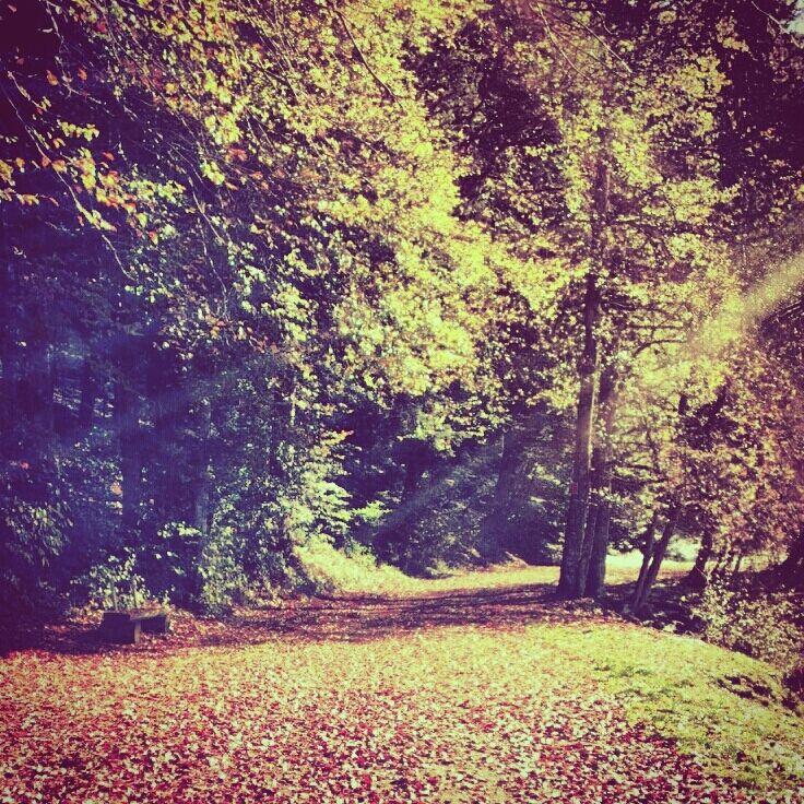 autumn time in Jura