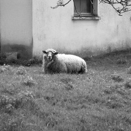 photography black & white nature pets & animals cute