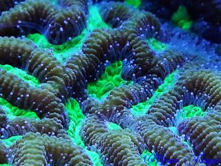 nature pets & animals colorful macro coral photography