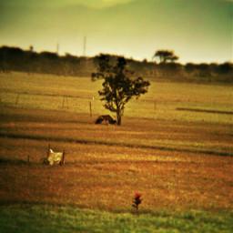 mobilephotograph nature
