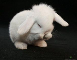 photography emotions cute pets & animals aww rabbit