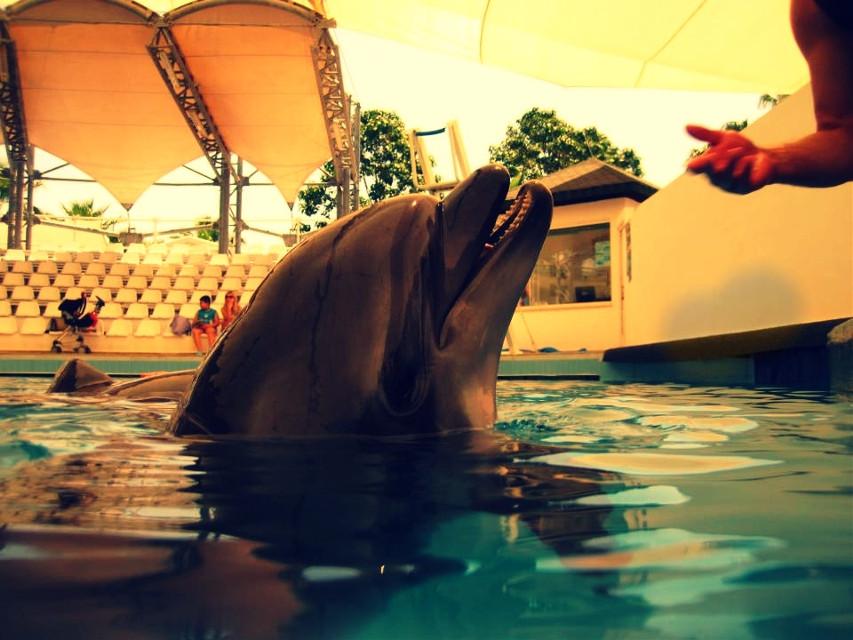 #dolphin #dolphinland
