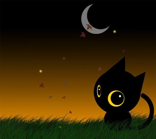 Halloween Cat HD desktop wallpaper  WallpapersWidecom