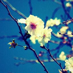nature spring flower