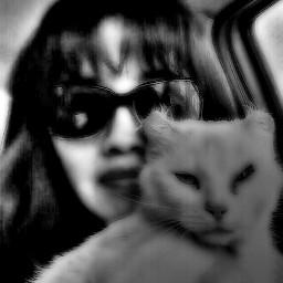 black & white pets & animals black & white photography retro