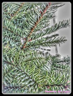 xmas christmas christmas tree fattal wapjoy