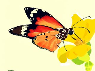 dcbutterfly pencil art nature colorful color splash drawing