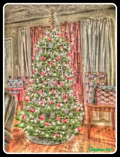xmas fattal christmas christmas tree wapjoy
