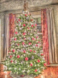 christmas xmas christmas tree fattal