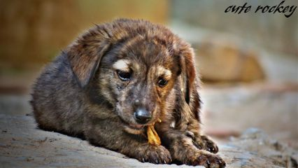 canon photography pets & animals animal baby cute